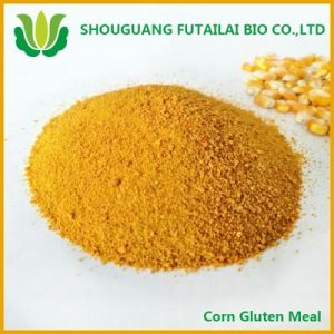 Corn Gluten with High Quality