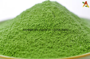 100% Natural Water Soluble Wheat Grass Juice Powder