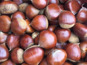 Chinese Fresh Chestnut with Best Price pictures & photos