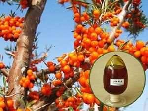 Organic Sea Buckthorn Seed Oil