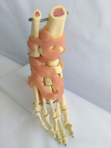 The Foot Joint Functional Model