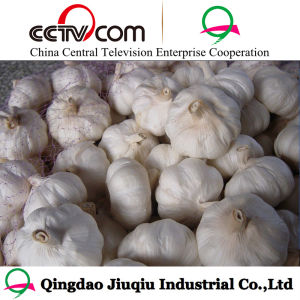 10kg Box Fresh Normal White 5.0cm Garlic