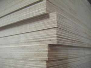 Carb Fsc Certification White Birch Plywood for Furniture pictures & photos