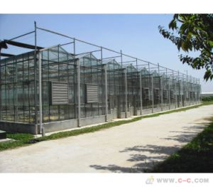 Agricultural Large Glass Greenhouse for Mushroom/Roses/Tomatoes with Strong Steel Frame