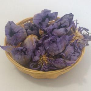 China 4036 Lan Lian Hua Dried Blue Lotus Flower China Blue Lotus
