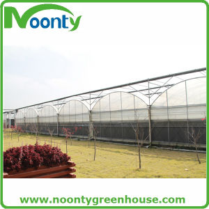 The Cheapest Hot Sale Agricultural/Commercial Plastic Greenhouse