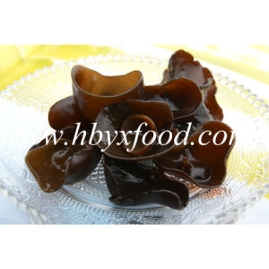 2.5-3cm Organic Natural Black Fungus Cloud Wood Eea
