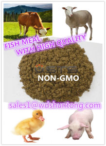 Fish Meal with High Protein (60% 65% 72%) for Animal Feed