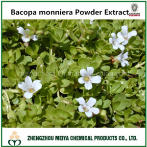 Tcm Natural Bacopa Powder Extract with Active Assay Bacopaside/Bacoside pictures & photos