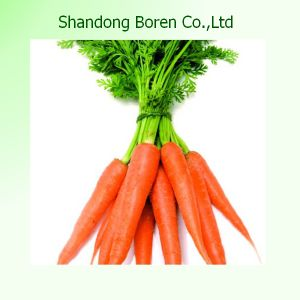 2015 Best Quality New Crop Purple Fresh Carrot