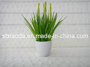 Artificial Plastic Grass Bonsai (XD13-93)