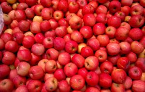 Chinese Fruit Fresh Qinguan Apple pictures & photos