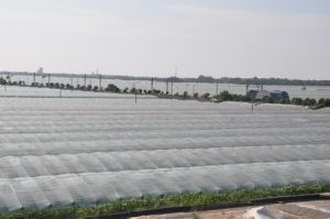 PE Anti-Age Agriculture Film for Greenhouse