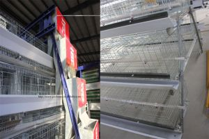 Wire Mesh Poultry Farms Equipment for Layer Chicken pictures & photos