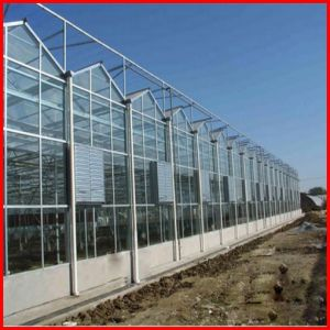 China Agriculture Venlo Multi Span Polycarbonate Sheet Greenhouse for Garden pictures & photos