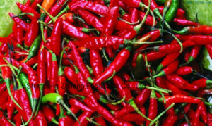 2017 Dehydreted Red Chilli for Exporting pictures & photos