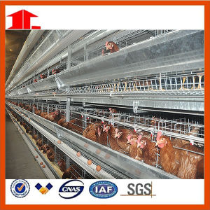 Poultry Feed Manufacturers H Type Layer Chicken Cage Farm Equipment for Chicken House pictures & photos