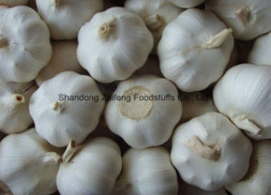 Competitive Fresh White Garlic with High Harvest pictures & photos