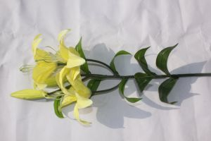 3 Heads Real Touch Artificial Lily Silk Decorative Flower for Wedding Decoration pictures & photos