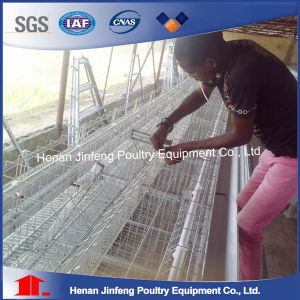 Automatic Chicken Cage System a Type for Poultry Farms pictures & photos