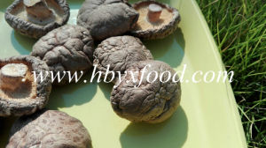 Grade a Natural Dried Vegetable Smooth Shiitake Mushroom pictures & photos