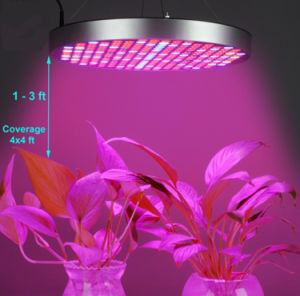 4x4 Grow Tent 1000w Led Yield