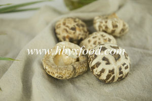 Dried Shiitake Mushroom with Stick (White Flower) pictures & photos