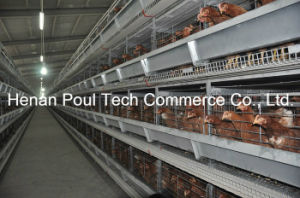 New Frame Layer Chicken Cage System (Euro Standard) pictures & photos