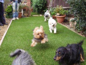 Artificial Grass Carpet for Lawn