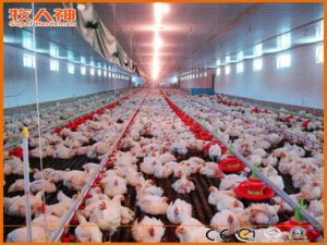 Poultry & Livestock Machinery with Prefab Construction One Stop Service pictures & photos