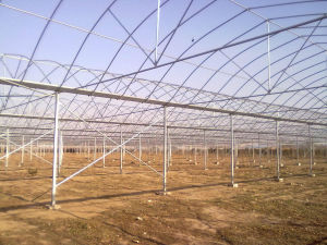Multi-Span Tunnel Greenhouse for Vegetable and Flower Growing pictures & photos