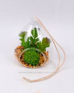 Handmade Mixed Succulent in Glass with Rocks
