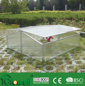 Cold Frame Greenhouse for Young Plants Growing (C304) pictures & photos