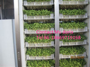 Automatic Bean Sprout Machine/Bean Sprouting Machine/Bean Sprouter pictures & photos
