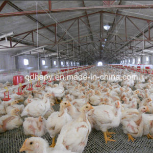 Modern Design Automatic Poultry Farming Equipment for Broiler Chicken pictures & photos