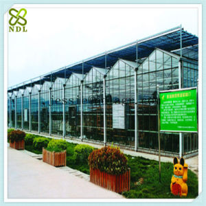 Professional Multi-Span Hydroponic Green House