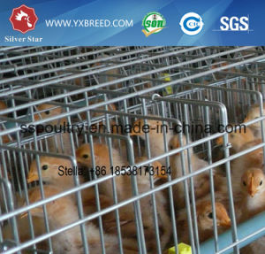 Fully Automatic Battery Chicken Broiler Cage pictures & photos