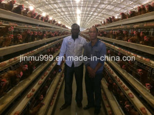 Hot High Quality Layer Chicken Farm Poultry Cages From China pictures & photos