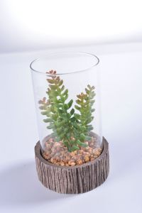Mini Succulent in Glass Vase with Cement Holder with Mini Rock for Christamas Gift