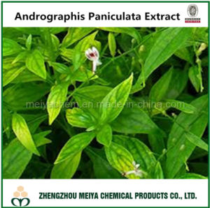 Factory Supply Andrographis Paniculata Extract with Andrographolide 5-95% HPLC pictures & photos