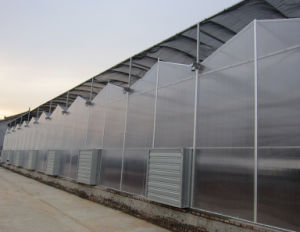 70% Discount Venlo Multi-Span PC Board Agricultural Greenhouse