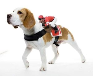 Special Pet Producst, Dog Costume Harness pictures & photos