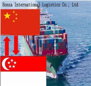 China Economical Sea Transportation From Shenzhen/Shanghai