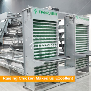 A type automatic battery chicken cages used for egg chicken pictures & photos