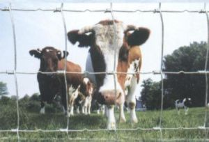 High Quality Lower Price Cattle Fence pictures & photos