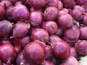 Shandong Red Onion in Low Price