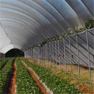 UV Coating Clear Greenhouse for Vegetable Used Plastic Film Cover for Hothouse