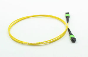 MPO/APC 12 Fiber Cable Fiber Optic for Data Transmission pictures & photos