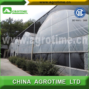 Poultry Multi-Span Greenhouse with Inside Shade Net System (CMB8060)