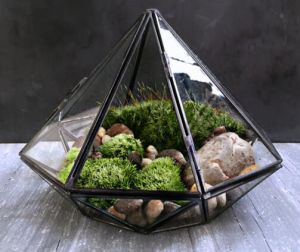 Local Tyrants Black Geometric Glass Solder Terrarium Housing for Plants Moss pictures & photos